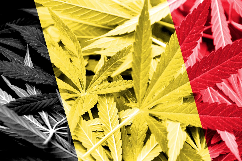 belgium,cannabis,errors seeds, seedbank, ukrainian seedbank,