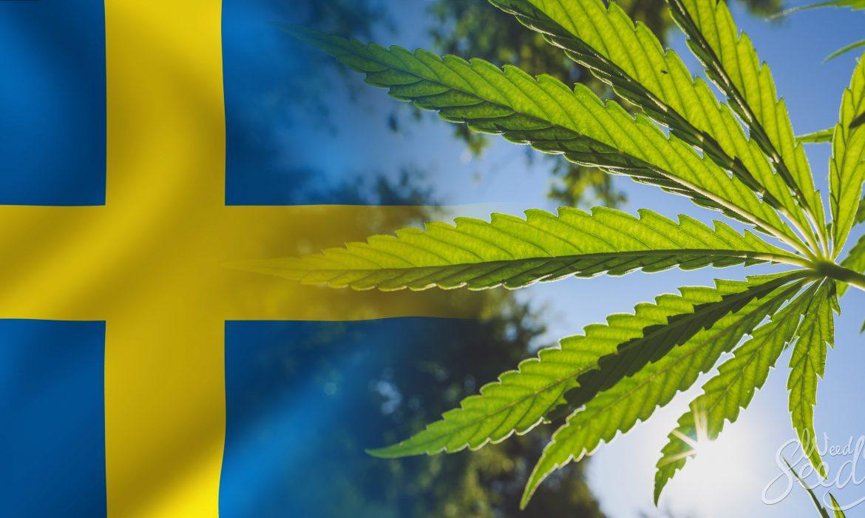 В Швеции разрешили марихуану в медицинских целях