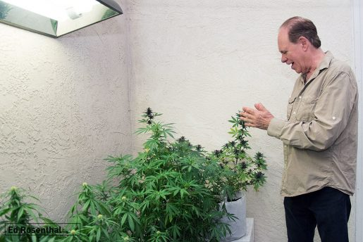 ed rosenthal, weed, cannabis, ganja, mj, marijuana,