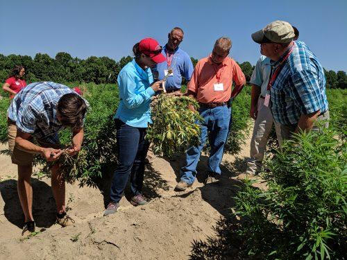 выращивание марихуаны, производство марихуаны, экскурсия по плантации,