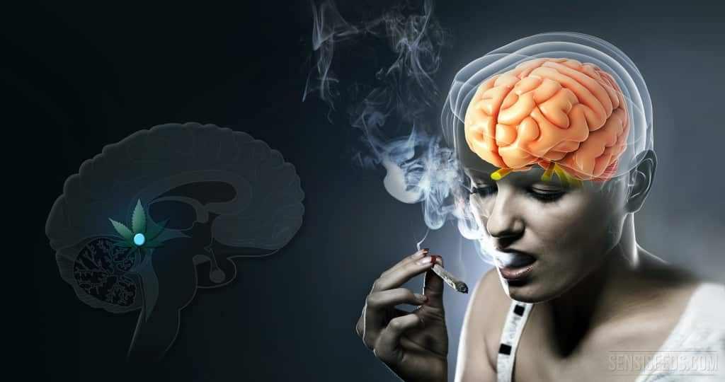 Мозг вырабатывает аналог марихуаны