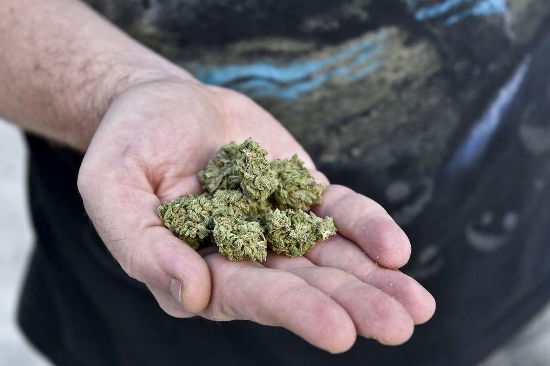 марихуана, выращивание конопли, конопля, травка, план,