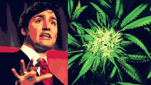 weed, errors seeds, seeds, seedbank, mj, cannabis,