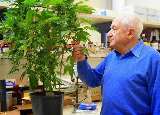 weed, cannabis, hemp, pot, mj, errors seeds,