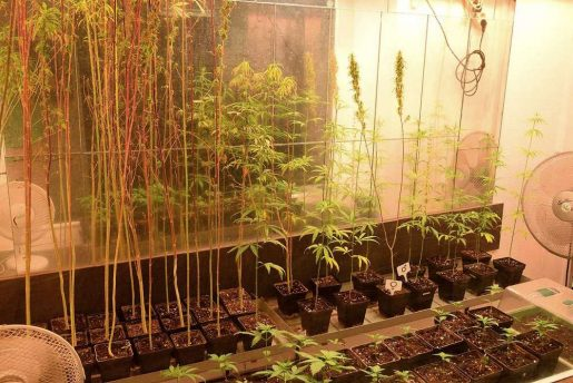 cannabis, museum, berlin, weed, hemp, oil, thc, cbd, seeds,