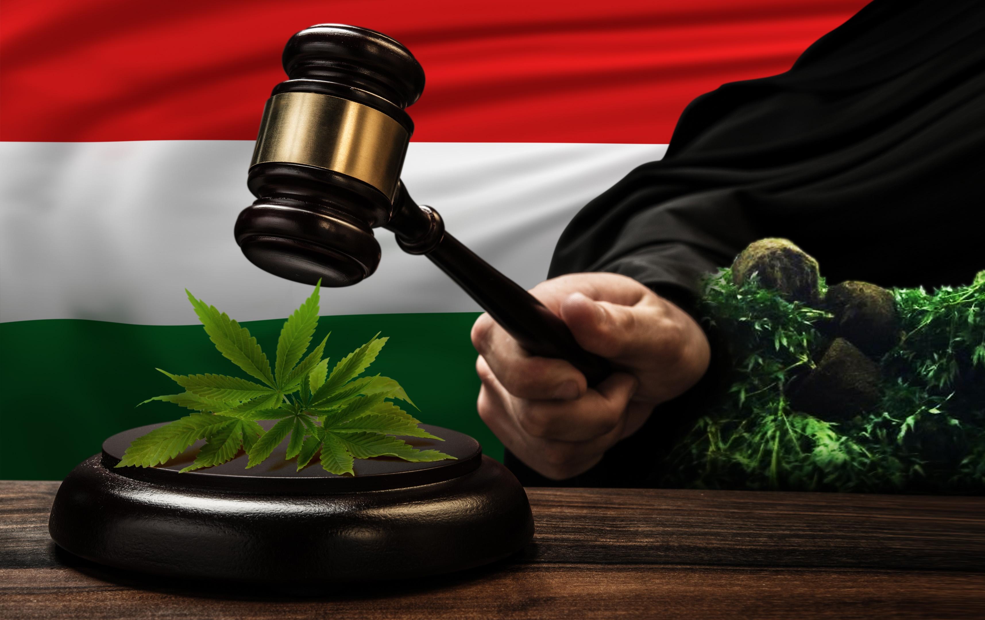 выращивание марихуаны, конопля, марихуана,