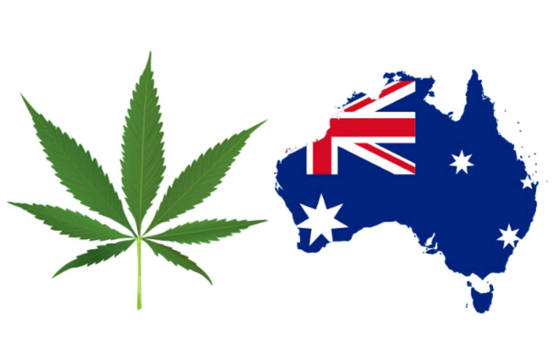 Австралия конопля геродот конопли