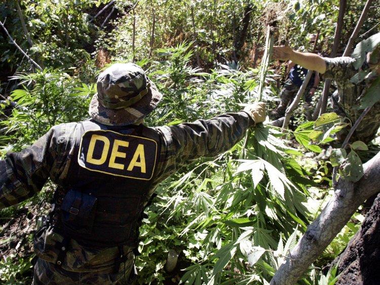 Колорадо: Федералы объявляют войну медицинской марихуане штата