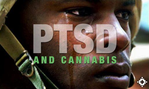 медицинская конопля, марихуана для лечения, медицинские сорта марихуаны,