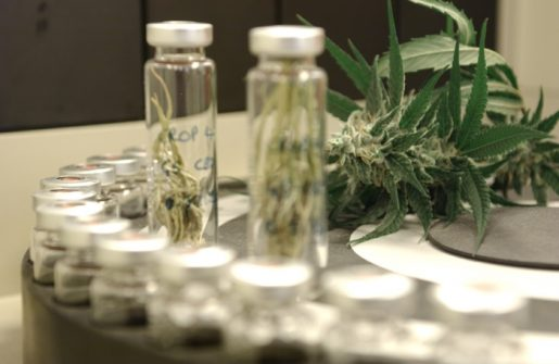 лекарственные препараты из каннабиса, медицинское применение каннабиса, медицинская марихуана,