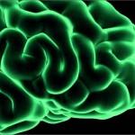 reasons-why-brain-loves-cannabis-hero