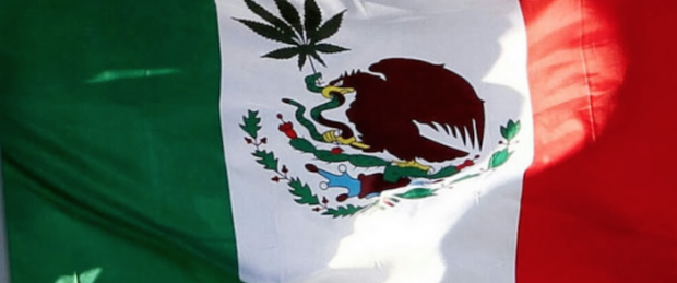 1474530501_mexico_high_court_postpone_marijuana_legalization_case-700x336