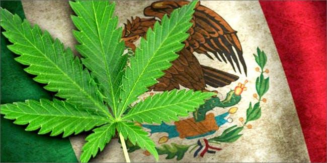 Мексика легализовала медицинскую марихуану