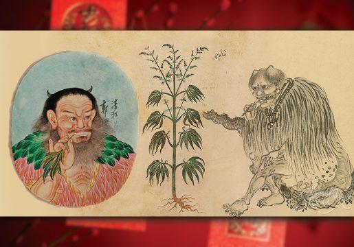 выращивание марихуаны, конопляная промышленность, марихуана, конопля,