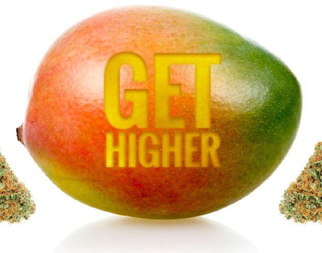 употребление марихуаны, фрукты и конопля, марихуана, манго, конопля,