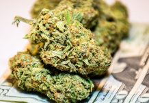 способы выращивания, выращивание марихуаны, dollars, финансы,