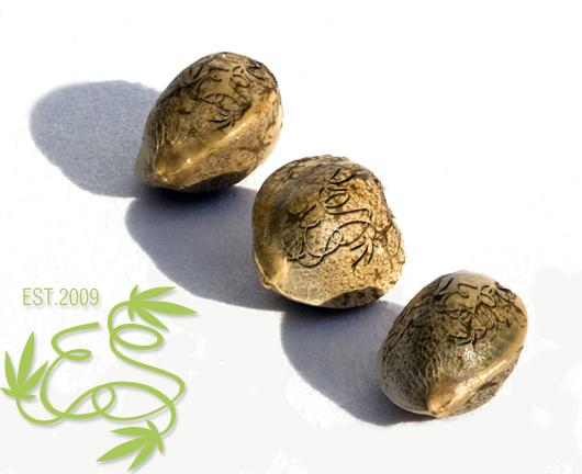 акции от Errors Seeds, постоянные акции, семена конопли, скидки на семена конопли,