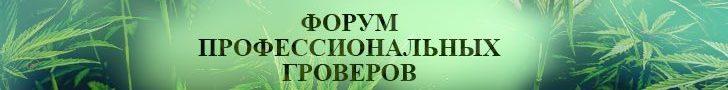 Интернет магазин семян конопли в Украине