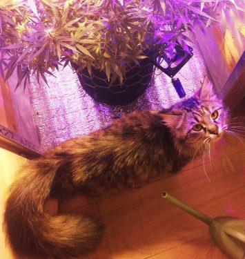 cannabis, medical marijuana, канабис, медицинская марихуана, животные, конопля,