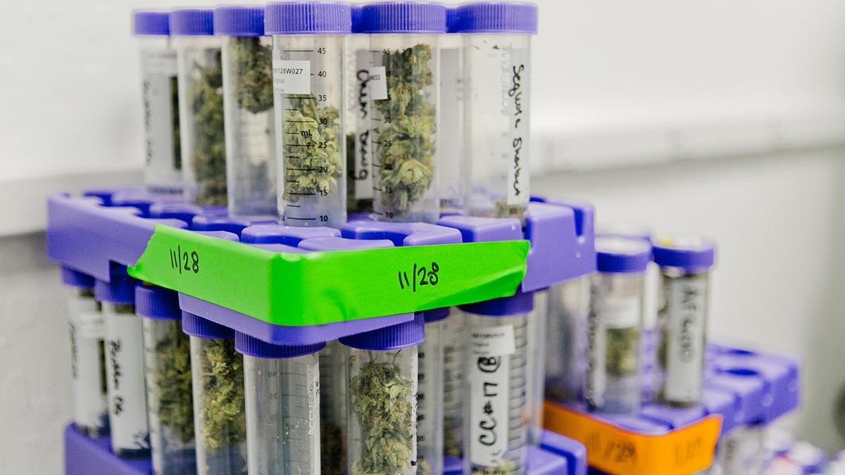 выращивание марихуаны, новые технологии в индустрии каннабиса, марихуана, каннабис,
