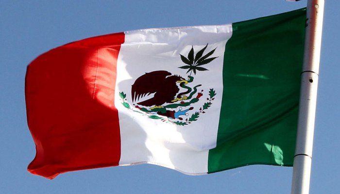 поднят вопрос о полной легализации марихуаны