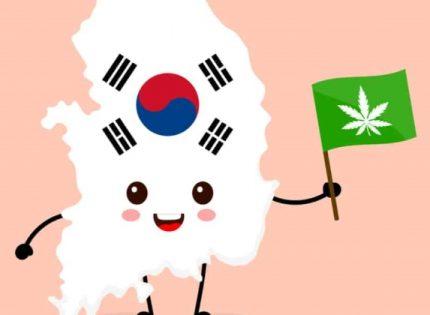 Южная Корея легализует медицинский каннабис