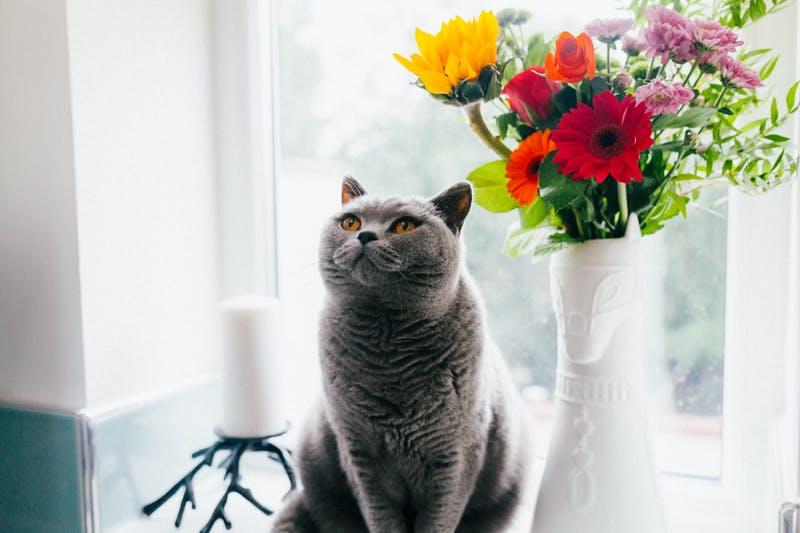 Конопля и кошки марихуана раковые больные