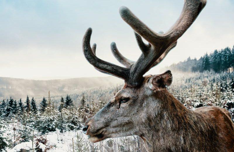 Всё что вы хотели знать о животных, которые могут кайфануть от травки.ч.3