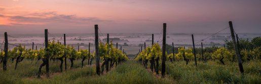 cannabis wine, вино из каннабиса