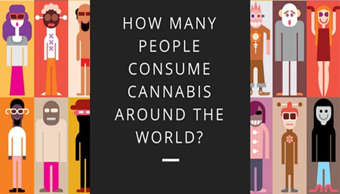 потребители марихуаны, статистические данные, информация для размышления, статистика марихуаны,