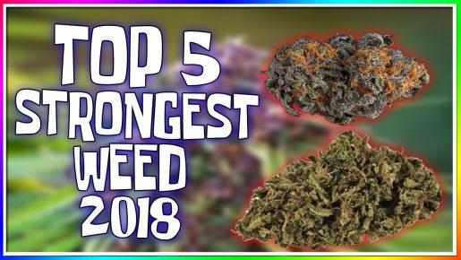 top strains, best weed, cup 2018, призёры кубков, сорта марихуаны,