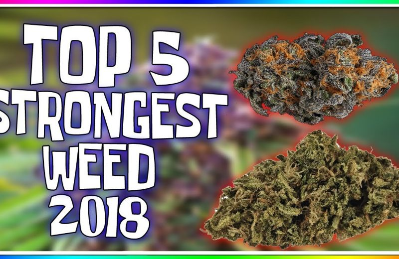 top strains, best weed, cup 2018, призёры кубков, сорта марихуаны,