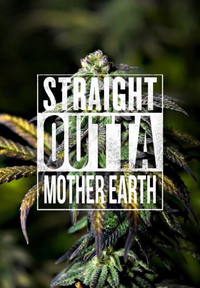 марихуана, конопля, распространение марихуаны, марихуана в мире,