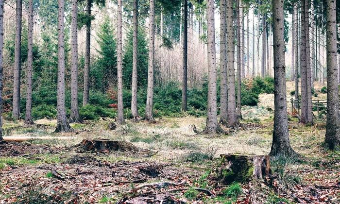 вырубка леса, альтернатива древесине,