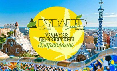 Pyramid Seeds сид-банк из солнечной Барселоны