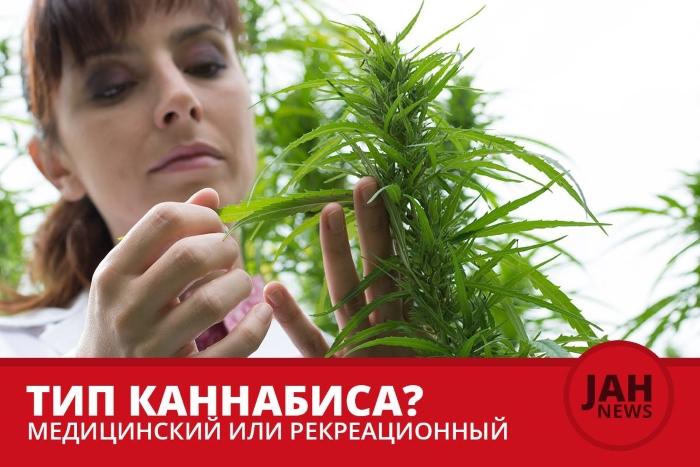 Медицинская или рекреационная марихуана – в чем разница?