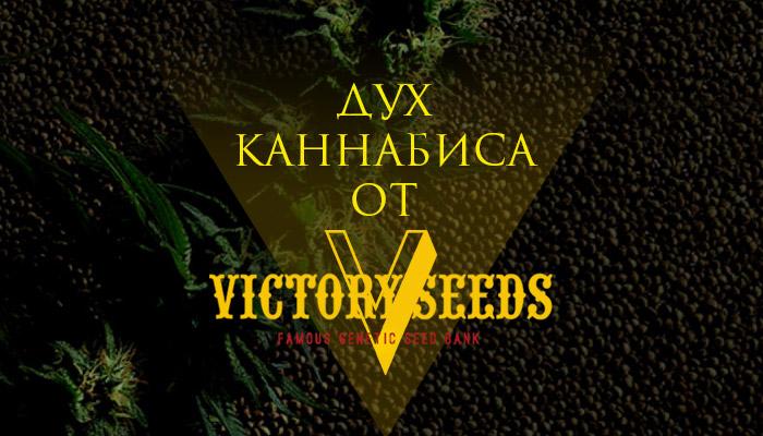 Дух каннабиса от Victory Seeds