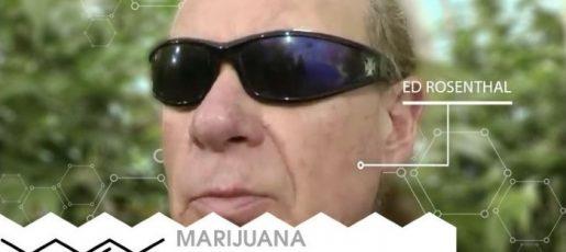 Ask Ed, high times, ed rosenthal, эд розенталь, гуру каннабиса, гуру ганжи, гуру конопли, гуру марихуаны, библия гровера, Marijuana Growers Guide, Cannabis Culture, magazine, zine, каннабис, марихуана, конопля, ганжа, ganja, выращивание марихуаны, гровинг,