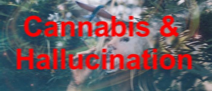 галлюцинации от канабиса, курение конопли, курение марихуаны, вейп, даббинг, концентраты каннабиса, тгк, кбд, такое возможно, причины галлюцинаций, визуальные и слуховые, лечение, решение проблемы,