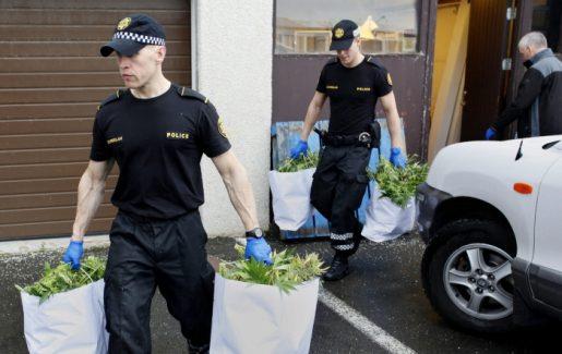 арест плантации каннабиса