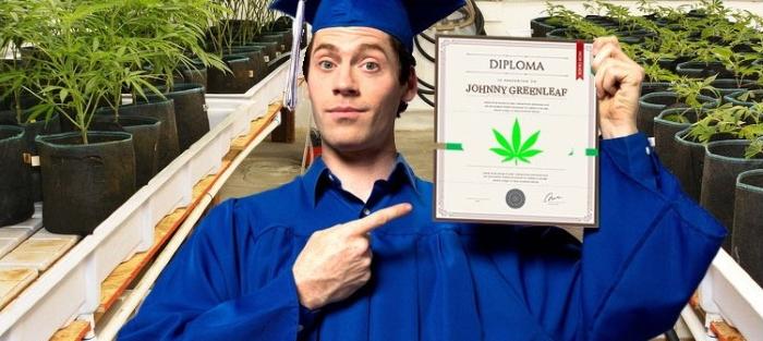 Высшее образование: колледжи и университеты марихуаны