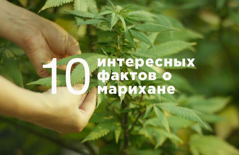 10 фактов о марихуане