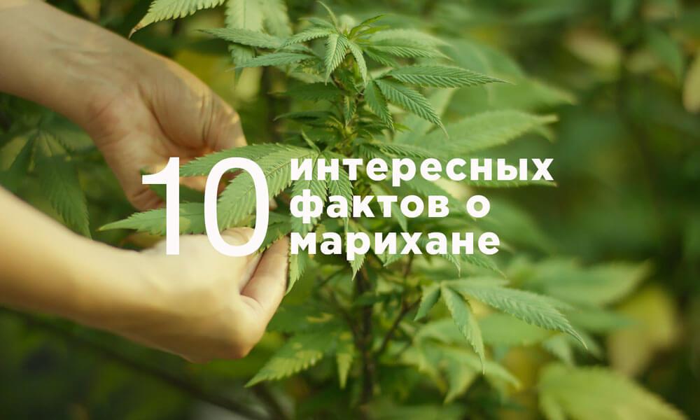 10 интересных фактов о марихуане